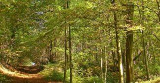 il est possible d'investir dans une forêt